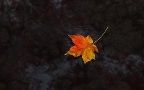 Обои осень, вода, лист