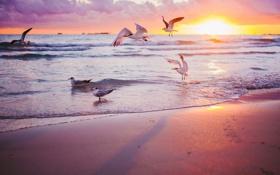 Картинка море, закат, птицы