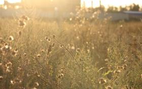 Обои солнце, лучи, растения