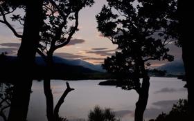 Картинка силуэты, небо, облака, деревья, ночь, пейзаж