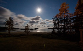 Картинка острова, деревья, ночь, озеро, луна, сосны, небо. звезды