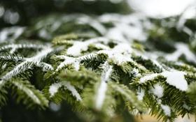 Картинка снег, иголки, елка