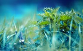 Картинка зелень, трава, макро, свет, крапива