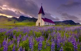 Картинка цветы, горы, луг, церковь, люпин