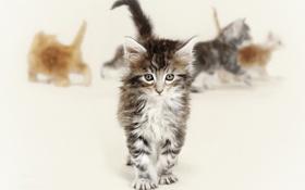 Картинка глаза, взгляд, Кошки, котята, пол, рыжие, серые
