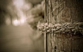 Картинка макро, дерево, фотографии, канаты, древесина, верёвка, верёвки