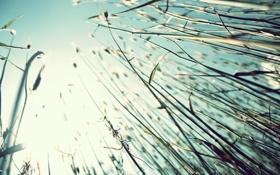 Картинка небо, трава, природа, фото, обои, растения, ракурс