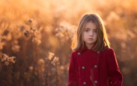 Обои свет, девочка, пальто, Golden, боке