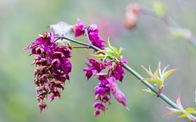 Обои листья, размытость, ветка, цветы