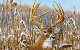 Картинка зима, небо, снег, рисунок, картина, олень, рога