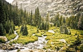 Обои лес, трава, деревья, пейзаж, горы, природа, река