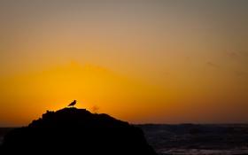 Картинка закат, облака, небо, солнце, океан, птица, вода