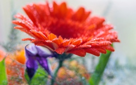 Обои цветок, вода, капли, лепестки