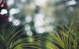 Обои трава, макро, размытие, травинки