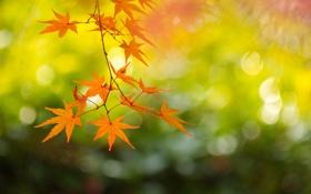 Обои осень, ветка, Япония, клён, Киото, By ジェイリー