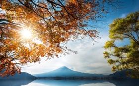 Картинка осень, листья, деревья, горы, ветки, озеро, берег
