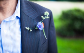 Картинка цветок, синий, голубой, костюм, рубашка, пиджак