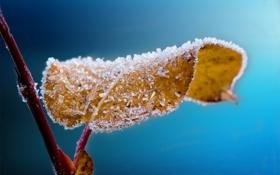 Обои иней, осень, лист, ветка, кристаллы
