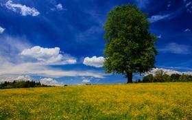 Обои цветы, дерево, Германия, Бавария, луг, Germany, Bavaria