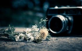 Картинка макро, фотоаппарат, Wild Flowers