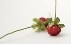 Картинка макро, земляника, ягода