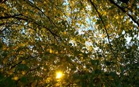 Обои осень, листья, солнце, лучи, ветки, природа, ветви