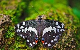 Обои бабочка, мох, макро