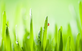 Обои трава, капли, природа, зеленый