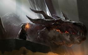 Обои дракон, человек, меч, факел