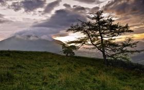Обои пейзаж, закат, горы, природа, дерево