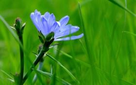 Обои трава, лепестки, стебель, луг