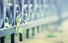 Обои листья, металл, сталь, растения, ограда, железо, заборы