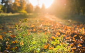 Обои осень, свет, природа