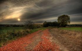 Картинка дорога, небо, серый