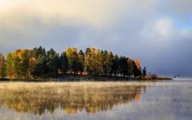 Картинка осень, деревья, птицы, туман, озеро, Швеция, Вермланд
