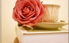 Обои фон, обои, узор, роза, кружка, книга, блюдце