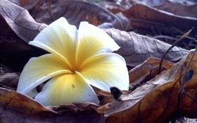 Обои цветок, листья, природа, лепестки, веточки