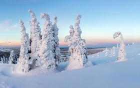 Обои trees, sunset, snow, Finland