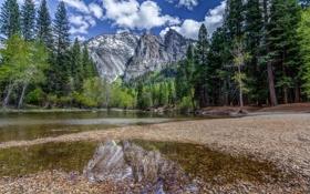 Обои листья, лес, река, природа, горы, вода