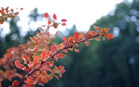 Обои осень, блики, размытость, листья, природа, красные, свет