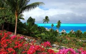 Обои Park, nature, тропики, океан, лагуна, tropics, lagoon