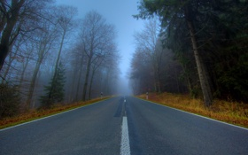 Обои дорога, деревья, природа, путь, дерево, пейзажи, дороги