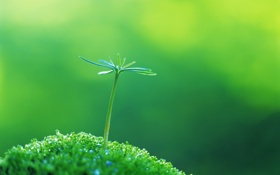 Обои весна, зеленые, трава, green, капля, зелень, вода