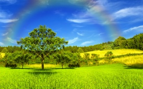 Обои солнечный свет, деревья, Золотой луг, небеса, радуга