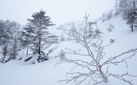 Картинка зима, снег, деревья, туман, склон