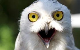Обои глаза, желтый, птица, клюв