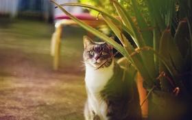 Обои кот, листья, серый