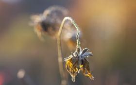 Обои осень, цветок, природа