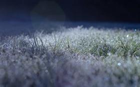 Картинка иней, трава, свет, блики, заморозки