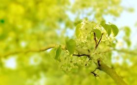 Обои зелень, цветок, макро